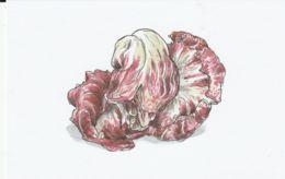 Postcard - Art - Wendy MacNaughton - Red Lettuce - New - Postcards