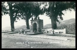 MURÇA - Miraduro Nas árvores.   Carte Postale - Vila Real