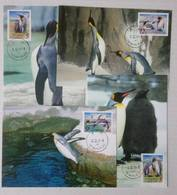 Maxi Cards Of Taiwan 2006 Cute Animal - King Penguin Stamps - 1945-... Republic Of China