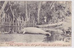 Cpa-nouvelle Caledonie-dugong Ou Vache Marine-personnages-edi Bergeret N°.... - Nouvelle Calédonie