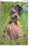 AN 035 , OLD FANTASY POSTCARD , ANIMALS , DOGS  , - Chiens