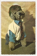 AN 038, OLD FANTASY POSTCARD , ANIMALS , DOGS  , - Chiens