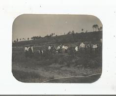 FONTAINEBLEAU (77) PHOTO MANOEUVRE MILITAIRE 23 24 MAI 1915 (CONSTRUCTION TRANCHEES) - Guerre, Militaire