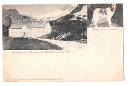 Suisse Switzerland Souvenir De L'hospice De Simplon Chien Saint St Bernard Altitude 2001 Non Circulée - VS Valais