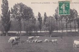 NEUVILLE SUR SAONE Vers L'Ile  Les Bords De La Saône - Neuville Sur Saone