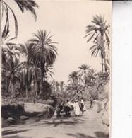 TOZEUR TUNISIE  Oasis  1923   Photo Amateur Format Environ 5,5 X 7,5 Tirage Années '30 - Lugares