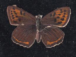 Découpi  Papillon  Découpis 30 X  20 Mm - Découpis