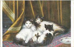 CPA - Chat - Illustrateur - - Gatos