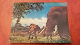 OLD  Postcard 3D Stereo PC 1980s Elephant - Elephants