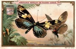 CHROMO LIEBIG S519 PAPILLON ELICONIA DORIS BUTTERFLY 1894 - Liebig