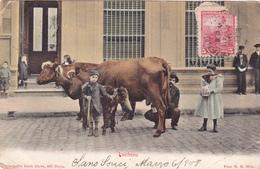 CPA ARGENTINE - PETIT METIER - Le VENDEUR De Lait De Vache Ambulant En 1908 - Photo H.G Holds (Buenos Aires) - Argentine