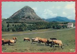 CP-07- Le MONT GERBIER-DE-JONCS Et La Chaîne De Montagnes*Animation* 2 SCAN- - Unclassified