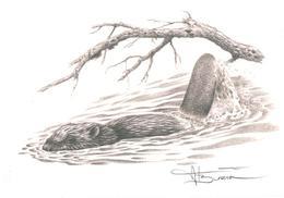 A.BUZIN  CASTOR SEPIA - 1985-.. Birds (Buzin)