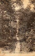 - SEIGNELAY (89) - Allée De La Montagne Au Bois Du Vernoy  -8482- - Seignelay