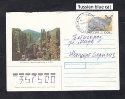 1996 .RUSSIA.Russian Blue Cat. - Gatos Domésticos