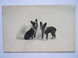 2 Chiens Circulée 1913 - Chiens