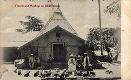 INDIA // INDE. TEMPLE AND MONKEYS ON JAKKO, SIMLA - Inde