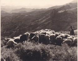 CANARIES  GRAN CANARIA Crue De TEJEOA Troupeau Moutons  1956 Photo Amateur Format 7,5 X 5,5 Cm Tirage Années '30 - Plaatsen
