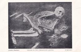 Skeleton In Cist Harlyn Bay Cornwall Vintage Postcard - Angleterre