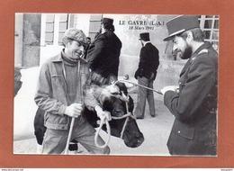 LE GAVRE   Mars 1981  MARQUAGE DES BETES... - Le Gavre