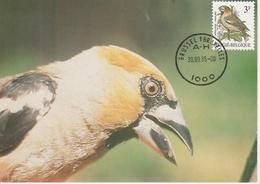 BUZIN.  LE GROSBEC - 1985-.. Birds (Buzin)