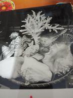 FOTO CARD CONCHIGLIE  OSTRICA  CONCHIGLIA  SELL   CORALLO  VB1975 HH2467 - Vissen & Schaaldieren