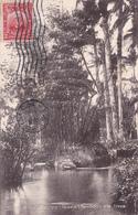CPA CUBA - Puentes Grandes Paisaje Bamboo Cane Trees -  1912 - Cuba