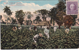 CPA CUBA - Plantation De Tabac -  1919 - Cuba