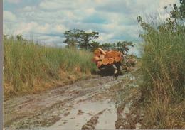 C. P. - PHOTO - IMAGES DU GABON - LA SAISON DES PLUIES - A 78 - J. TROLEZ - LIBREVILLE - TRANSPORT DE BOIS - Gabón