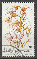 PIA - AFRICA DEL SUD - BOPHUTHATSWANA - 1981 : Flora : Piante Indigene : Themeda Riandra   - (Yv  80) - África Del Sur (1961-...)