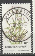 PIA - AFRICA DEL SUD - BOPHUTHATSWANA - 1984 : Flora : Piante Indigene : Urochloa Brachyura   - (Yv  119) - África Del Sur (1961-...)