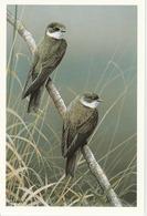 HIRONDELLE DE RIVAGE - Oiseaux