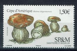 Saint Pierre And Miquelon, Mushroom, Boletus Chippewaensis, 2019, MNH VF - Nuovi