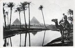 CT-03205- PIRAMIDI PALME CAMMELLO   VIAGGIATA 1963 - Piramidi