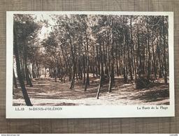 ST DENIS D'OLERON La Forêt De La Plage - Ile D'Oléron