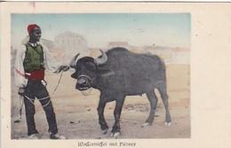 AK Wasserbüffel Mit Führer - Afrika - Feldpost Kgl. Preuss. Armee-Fernsprech-Abteilung 22 - 1917 (45608) - Afrika