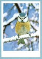 CP Oiseaux - Mésange - Photo G. Lacz - Oiseaux