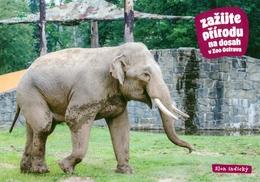 ZOO Ostrava, Czech Rep. - Asian Elephant - Tchéquie