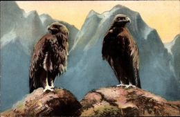 Cp Adler, Raubvögel - Unclassified