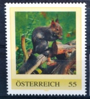 Pg722 Eichhörnchen, Squirrel, Ecureuil, Ardilla, Wildtiere, AT 2009 ** - Non Classés