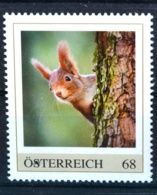 Ph847 Eichhörnchen, Squirrel, Ecureuil, Ardilla, Scoiattolo, Tiere, AT 2017 ** - Austria