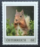 Pi191 Eichhörnchen, Squirrel, Ecureuil, Ardilla, Wildtiere, Animals, AT 2017 ** - Non Classés