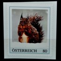 Pi237 Eichhörnchen, Sciurus Vulgaris, Squirrel, Ecureuil, Scoiattolo, AT 2017 ** - Austria