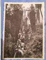 (E1) Ruwenzori : La Végétation Dense (4000 M.d'alt.). - Congo Belge - Autres