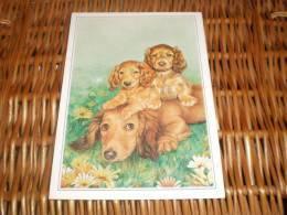 Hund Dog Postkarte Dackel Teckel Dachshund RARE Postcard - Cani