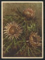 Svizzera 1930 Cartolina 100% Usata Con Francobollo, Fiori - Non Classificati