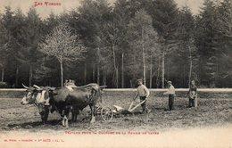 VOSGES - Travaux Pour La Culture De La Pomme De Terre - Landwirtschaftl. Anbau