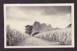 CPA Ile Maurice Mauritius Afrique Noire Circulé - Mauritius