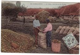 EN NORMANDIE - Le Cidre , Mise En Sac Des Pommes. - France