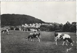 D25 - MAICHE - PÂTURAGES - Vaches - CPSM Dentelée Grand Format En Noir Et Blanc - France